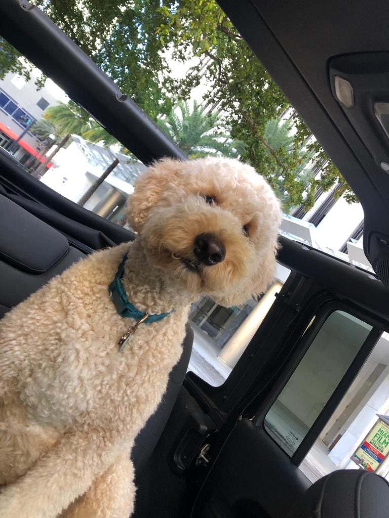 Mobile pet grooming Boca Raton